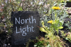 Physic Garden | North Light 2012